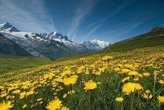 Bergen en bloemen in Oostenrijk.