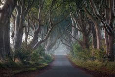 "The Hedges by Stephen Emerson on 500px. This is the ""Kings Road"" location as seen in the Game of Thrones series. Location Dark Hedges in Co Antrim, Northern Ireland."
