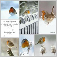 Our frozen landscape captured a world all fresh and cold, as we bundle up so warmly, winter stories will be told. @photogridorg #photogrid  #moodboard #moodboardchallenge  #collage #byJeetje♡ #photooftheday #inspirationboard#winter #seasons #january #snow #winterwonderland #robin #wintercozy #cozy #snugasabug #warmandcozy #love #lovelife #life #lifeisbeautiful #lovethelittlethings #nature