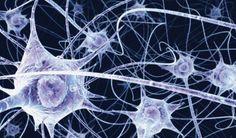 Comment pousser votre cerveau à fabriquer des de nouveaux neurones en 6 étapes