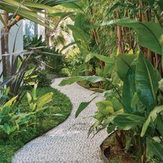 O corredor sinuoso com piso de mosaico, ideia do paisagista Koiti Mori, recebeu grama-amendoim (Arachis repens). Ela aprecia bastante sol ou meia-sombra e dispensa podas periódicas. No canteiro, à direita, estrelítzia-branca (Strelitzia augusta), que pede muito sol e solo rico em matéria orgânica.