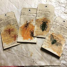 #tags #teadyed #journals #timholtz #stampersanonymous #entomology #bugs #moths #cute #creepy #creepycrawlies #lol #ideas #diffetent #myetsyshop