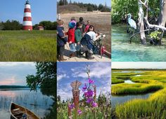 Protecting, Restoring, and Celebrating Estuaries: Where Salt and Freshwater Meet | response.restoration.noaa.gov