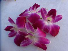 My lai at Grand Hyatt made of these orchids. Kauai, Hawaii