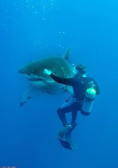 PrepareTheJourney… Crystal Dive Award Winning 5 Star Scuba Diving on Tropical Koh Tao in Thailand. Underwater Creatures, Underwater Life, Ocean Creatures, Orcas, Save The Sharks, Shark Pictures, Shark Bait, Delphine, Great White Shark