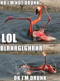 A drunk flamingo