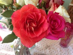 1 bright coral rose + 1 hot pink rose Hot Pink Roses, Coral, Girly, Bright, Flowers, Plants, Beautiful, Women's, Girly Girl
