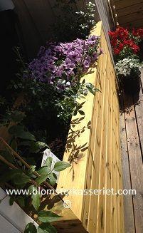 Isolert blomsterkasse fra Blomsterkasseriet. Godt beplantet. Lune, frodige og skjermede omgivelser i dine uterom. Et hav av plantemuligheter.