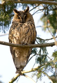Owls Festival