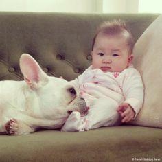 犬と赤ちゃん, French Bulldog and the new baby