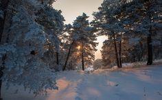 Download wallpapers winter, snow, morning, sunrise, winter landscape
