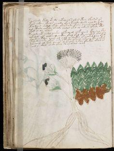Trọn bộ Bản thảo Voynich, cuốn sách bí ẩn nhất thế giới | MysTown.com