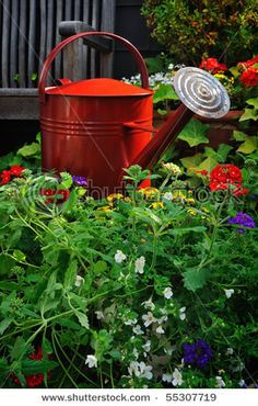 Red Watering Can among flowers