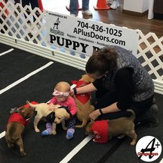 Our Puppy Bowl was a huge success, and we're so happy to hear about dogs in need finding their forever homes!