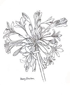 Original pen and ink drawing Henny Donovan Tangle Patterns, Embroidery Patterns, Flower Wall Design, Drawing Sketches, Drawings, Sketching, Drawing Stencils, Watercolor Projects, Plant Drawing