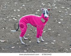 """Apparently when looking for a dog coat, I need to add """"greyhound"""" or """"whippet"""" to my search so they will actually be long enough!"""