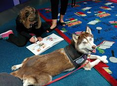 Therapy Dogs Helping Kids