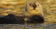 Please share and sign petition~~~~Stop Congress From Crippling the Endangered Species Act