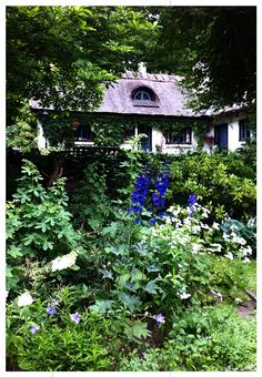 Cottagegarden Skogstorpet Sölvesborg Sweden. Scandinavian Garden, Gardens Of The World, Nordic Lights, Moss Garden, Some Pictures, Beautiful Gardens, Sweden, Garden Design, Garden Ideas