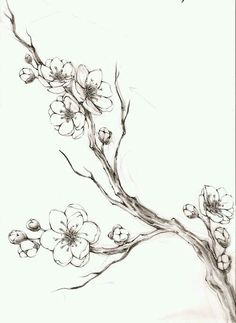 Flower Branch Drawing Black and White Cherry Blossom. Flower Branch Drawing Black and White Cherry Blossom. Cherry Blossom Branch by Malignantimpression On Deviantart Tree Branch Tattoo, Blossom Tree Tattoo, Blossom Trees, Cherry Blossoms, Tattoo Tree, Tattoo Bird, Cherry Blossom Branches, Cherry Blossom Tattoos, Tree Branch Art