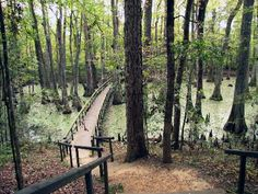 Cycling the Natchez Trace Parkway | Star Tribune
