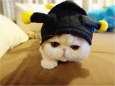 snoopy cat - Pesquisa Google