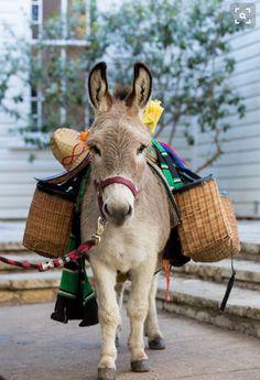 Market day with sweet donkey.