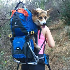 Found a backpack for when my corgi quits the hike #hiking #camping #outdoors #nature #travel #backpacking #adventure #marmot #outdoor #mountains #photography