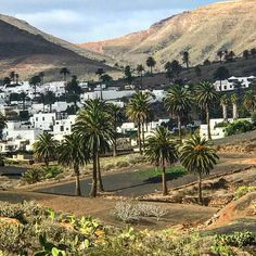 Beautiful village Haría !! #lanzarote #haria #canaryislands #village #nature #location #working #travel #peace #nopollution #love #beautiful @holacom