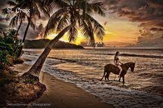 Sunset at Cane Bay on St. Croix VI. It was a beautiful evening. Denise Bennerson, photographer #Photographer #VirginIslands #USVI #virginislandsbeach #DeniseBennersonPhotography #CaribbeanSunset #sunsets #virginislandssunset #palmtrees #Beach #horse #Sunlight