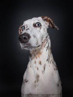 Tender Portraits of Skeptical Dogs – Fubiz Media I #DogLovers I #ForTheLoveOfDog