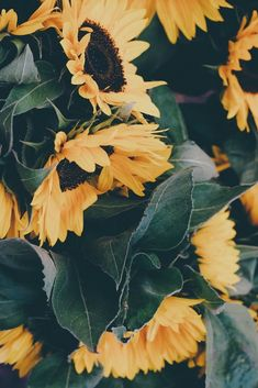 You are my sunshine my sunflowers 🌻 ⭐️ 100 stunning iPhone wallpaper 🤩⭐️ Sunflowers Background, Paper Sunflowers, My Flower, Flower Power, Sun Flowers, Sunflower Wallpaper, Sunflower Art, You Are My Sunshine, Phone Backgrounds