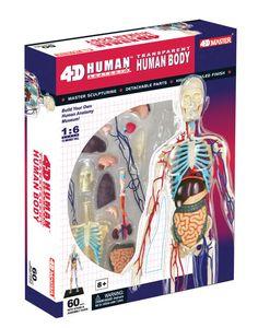 4D Transparent Human Body Anatomy Model | Main photo (Cover)