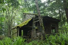 bohemianhomes:    Bohemian Homes: Cabin in the Woods