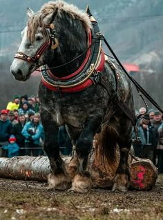 Big Horses, Types Of Horses, Work Horses, All The Pretty Horses, Beautiful Horses, Animals Beautiful, Clydesdale Horses, Majestic Horse, Vintage Horse