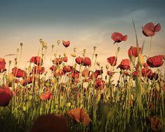 Les Paradis Artificiels, Opium Et Haschisch, Charles Baudelaire