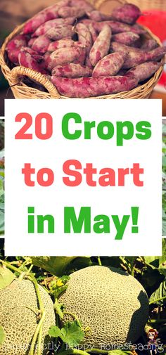 20 Crops to Start in May for your backyard garden or homestead. Late spring and summer gardening.