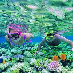 Green Island Attraction, Best Snorkeling, Pool Accessories, Charter Boat, Boat Rental, Snorkelling, Island Resort, Underwater World, Great Barrier Reef