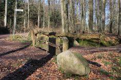 Boerschotten maart 2008 | Foto's Bos | Natuur | MijnAlbum - Fotoalbum Gratis Online!
