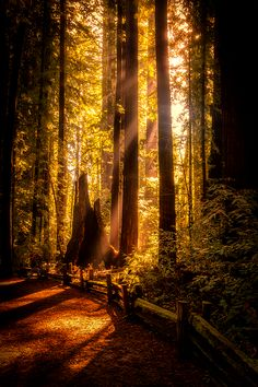 Sunbeams, The Redwoods, California photo via wondrous