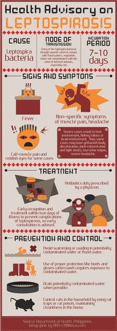 An infographic on the flood-borne disease Leptospirosis