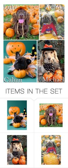 """""""Your Dog In A Costume By Your Pumpkins!"""" by x5sosxpreferencesx ❤ liked on Polyvore featuring art"""