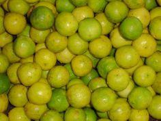 EcoPort Picture : Citrus limon