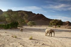 Desert-adapted elephant near Hoanib Skeleton Coast Camp