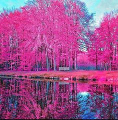 Discovered by Find images and videos about love, beautiful and pink on We Heart It - the app to get lost in what you love. Pink Trees, Colorful Trees, World Of Color, Nature Pictures, Beautiful Landscapes, Beautiful Scenery, Beautiful Artwork, Beautiful Places, Amazing Nature