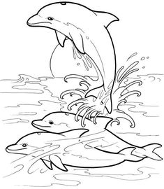 Welcome to Dover Publications Dolphins Dream Designs Mais Dolphin Coloring Pages, Animal Coloring Pages, Coloring Book Pages, Coloring Sheets, Dolphin Drawing, Dolphins Tattoo, Dover Publications, Digi Stamps, Coloring Pages For Kids