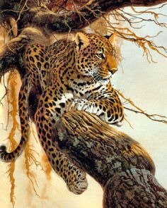 Leopard on a Tree, Wildlife by Al Agnew Picture on Canvas Hung on Copper Rod, Ready to Hang, Wall Art Décor Wildlife Paintings, Wildlife Art, Animal Paintings, Animal Drawings, Big Cats Art, Cat Art, Beautiful Cats, Animals Beautiful, Domestic Cat