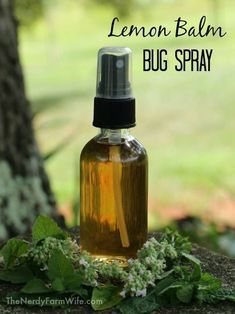 Make a lemon balm bug spray - Things to Do With Lemon Balm. clear glass spray bottle filled with diy homemade lemon balm bug spray natural repellent Herbal Remedies, Home Remedies, Natural Remedies, Health Remedies, Lemon Balm Recipes, Lemon Balm Uses, Salve Recipes, Herb Recipes, Diy Cosmetic