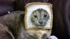 Laura, Holloween is coming so I am going to pin some potential cat costumes for you...Toast