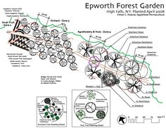 Detailed food forest plan for northern climates